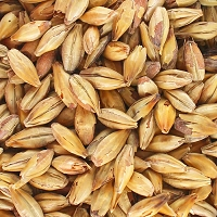 Canada Malting Premium 2 Row Brewers Malt